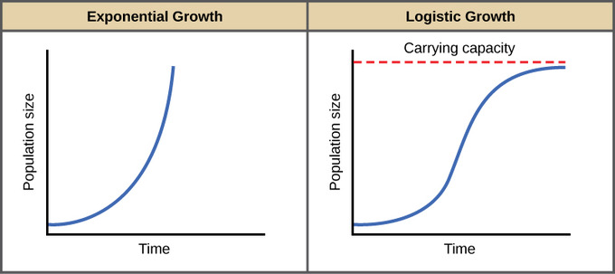 Exponential growth vs logistic growth